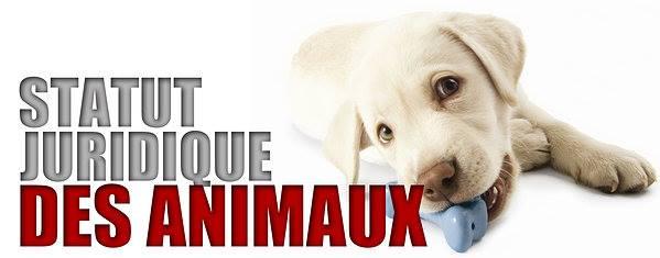 [JURIDIQUE] Statut Juridique de l'Animal Amendement 59 (ADOPTE) (PARIS ASSEMBLEE NATIONALE)