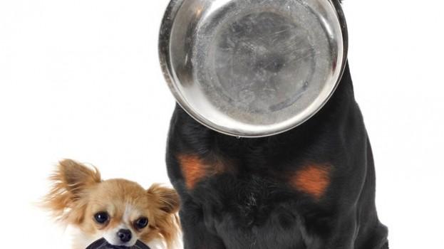 [VETERINAIRE] 5 aliments à ne pas donner à un chien