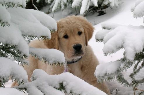 [VETERINAIRE] 8 Astuces pratiques pour protéger votre chien contre le froid