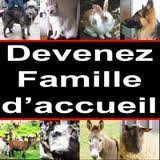 [PLACEMENT ANIMAUX] URGENT Suite problèmes de santé ces loulous cherchent Familles D'Accueils (DPT.28)