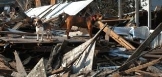 [DELEGATION] @FFPAOutremer URGENT Ouragan prévu : pouvez-vous prendre un chien ou un chat chez vous