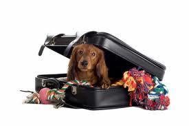 [VETERINAIRE] Ce que vous ne devez pas oublier avant de partir en voyage avec votre chien