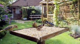 Bird Table - with birds feeding, Greenfinch, Goldfinch & Great Tit.     Date: