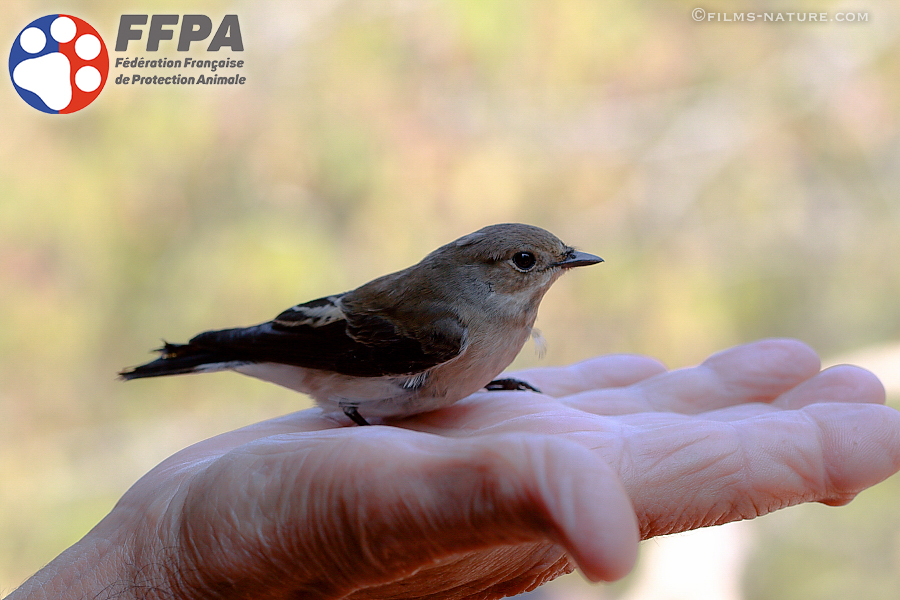 FFPAnimale Oiseau 2 Copyright