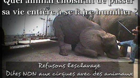 Non au cirque avec animaux