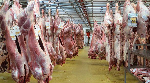 abattoir-abattage-viande