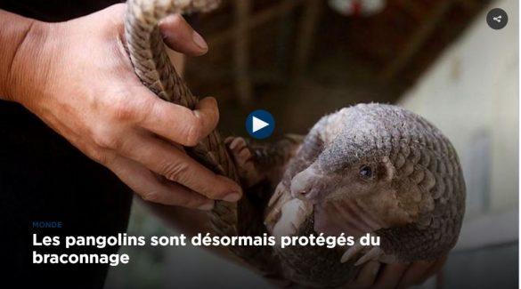 pangolin-euronews-cites