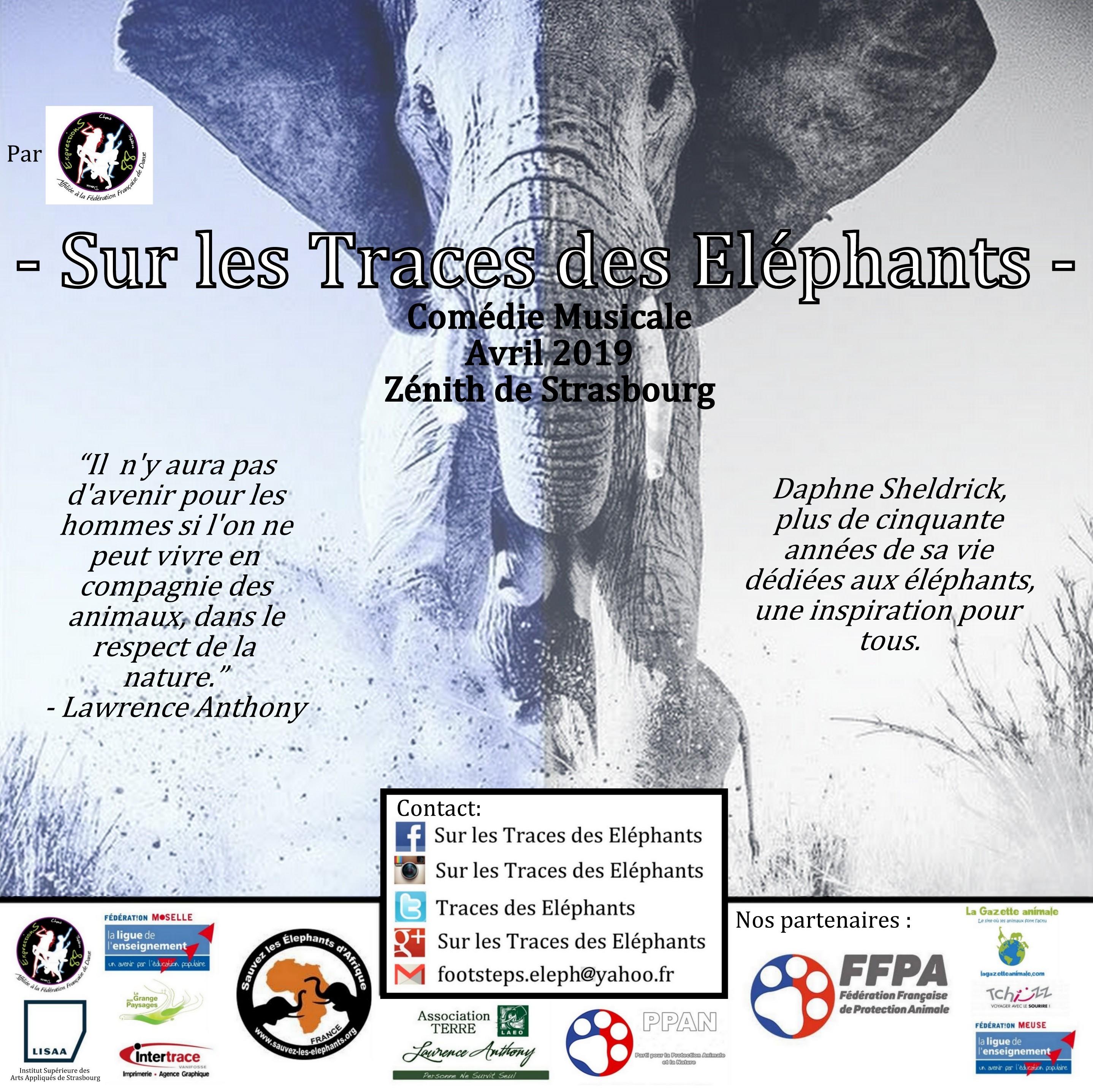 Sur les Traces des Elephants